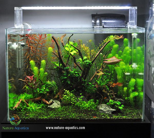 Planted Aquarium in Bangladesh